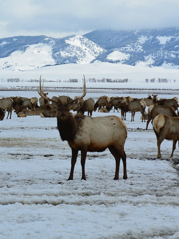 8 Places in Wyoming Every Movie Geek Must Visit | National ELK refuge (Django Unchained)