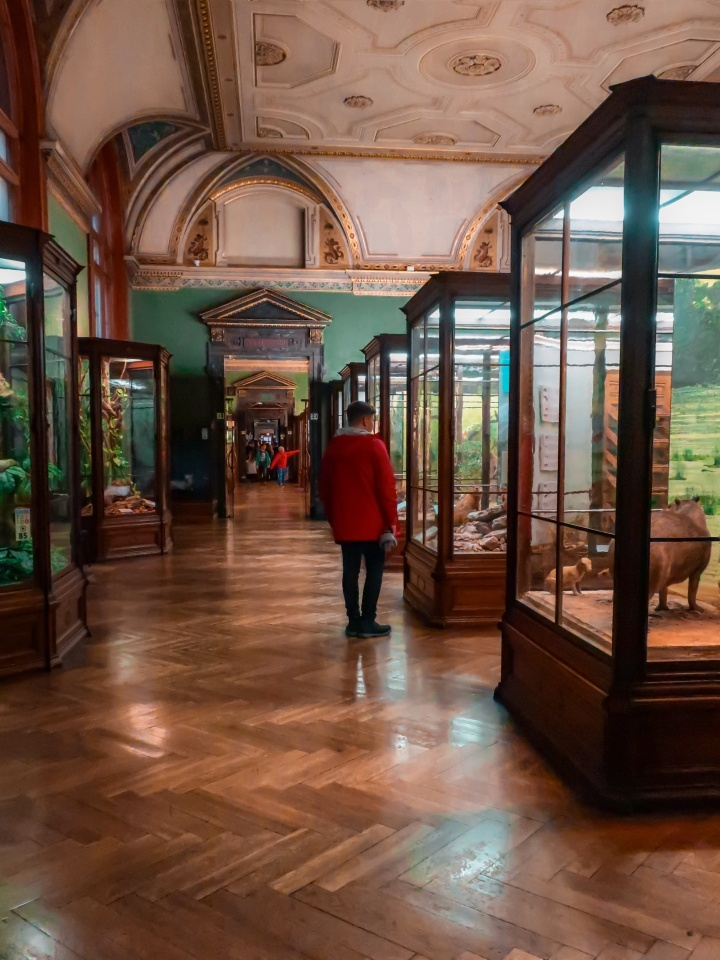 A Geeks Guide to Vienna | Natural History Museum