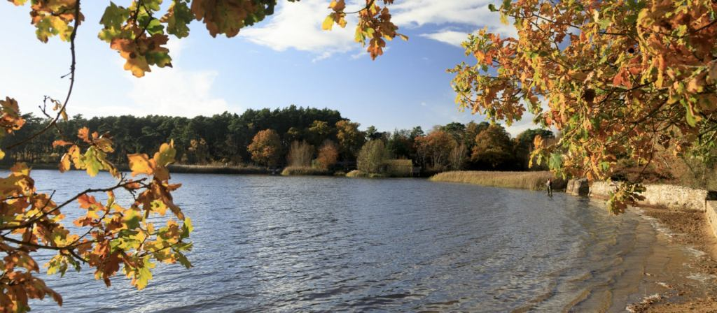 Movie Locations with the National Trust | Frensham Little Pond